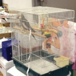 Even birds, ferrets and reptiles were brought to the shelter.