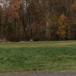 In the distance, a volunteer walks a dog staying at the shelter. The exercise is good for the animals, who may not be used to being crated.