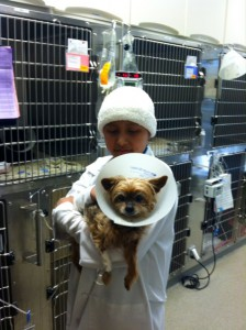 denisse holds a patient in the dog ward