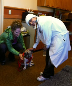 Denisse pets a pug in the rehabilitation room at NorthStar VETS
