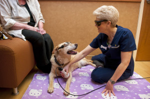 Sheila performing a laser therapy session on a patient