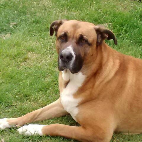 NorthStar VETS | Tales behind closed doors of a 24/7 Veterinary ...