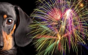 Fireworks-Doxie
