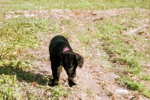 Biddy exploring life on the farm