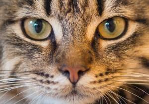 Feline Behavioral Urine Spraying Clinical Trial at NorthStar VETS