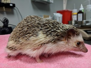 Hedgy3